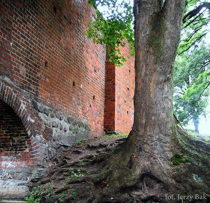 Fragment murów obronnych otaczających nasze miasto. www.facebook.com/...