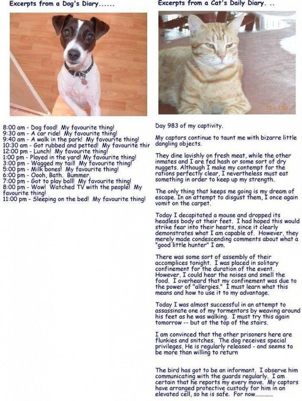 A One Day Diary Entry of a Dog!