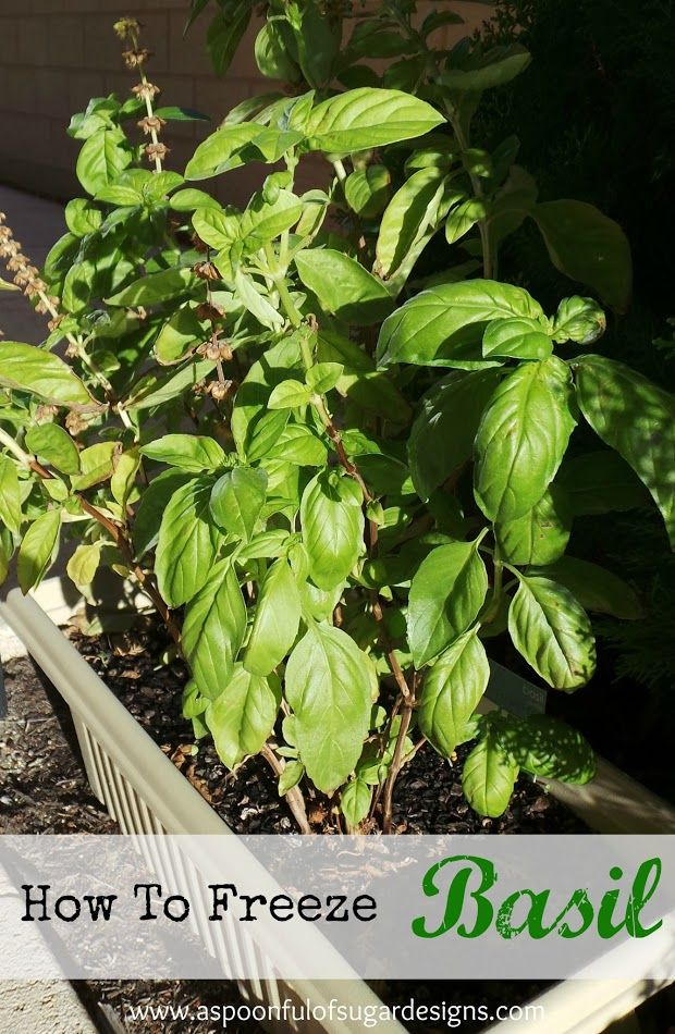 How To Freeze Basil - A Spoonful of Sugar