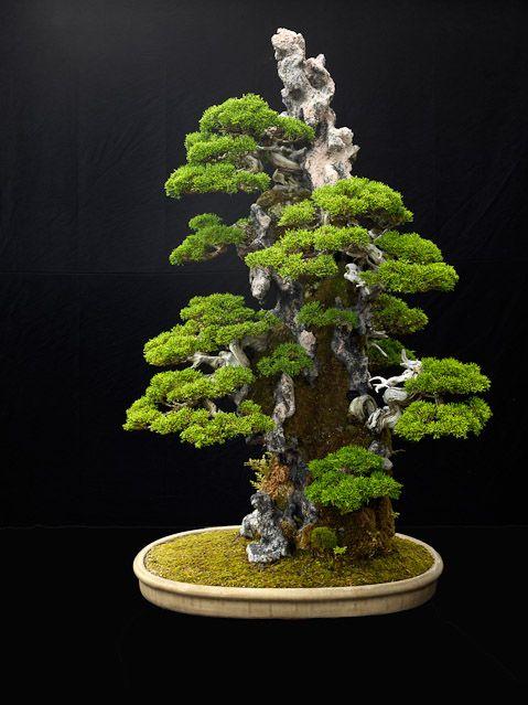 www.jonathan-singer-photography.com #bonsai #gardening