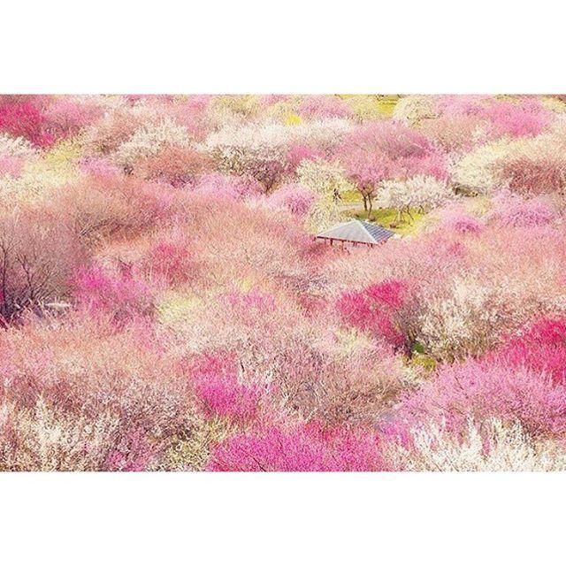 一度見たら忘れられない!この春見るべき「春の絶景」日本全国7選2016