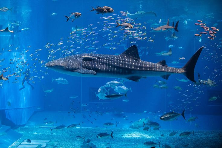 Discover a magical underwater world filled with amazing creatures only at Sea Life London Aquarium!