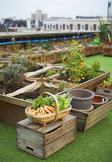 Urban Rooftop Garden Designs Changing City Architecture with Green Ideas