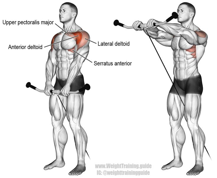Cable front raise. An isolation and push exercise. Target muscle: Anterior Deltoid. Synergistic muscles: Lateral Deltoid, Clavicular (Upper) Pectoralis Major, Serratus Anterior, and Middle and Lower Trapezius. Visit site to learn proper form.