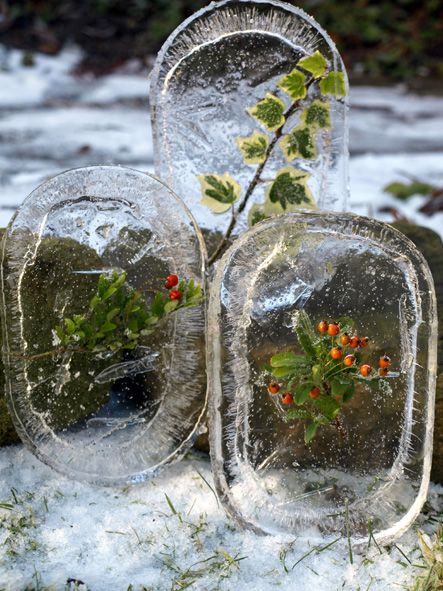 FROZEN ART~  Get a Lid, fill it with water pick something from nature, freeze it over night, and look at the great art it makes for winter fun!