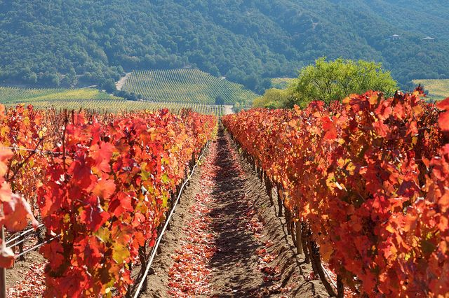 Otoño en la Ruta del Vino - Valle de Colchagua (Chile), #Colchagua