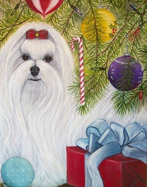 Maltese By The Christmas Tree