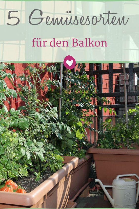 gem se auf dem balkon anpflanzen diese 5 sorten sind. Black Bedroom Furniture Sets. Home Design Ideas