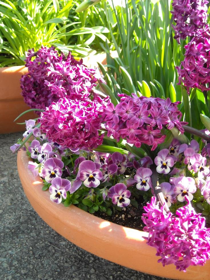 Los once mejores bulbos para plantar en otoño | Paisaje Libre