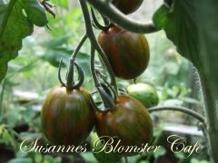 Tomat 'Green Tiger - frø - Cherry Tomat med røde og grønne striber. Lækker drivhustomat.  Tomaterne er søde og velsmagende, Når tomaten er moden er den fast at mærke på, har mørkerøde og grønne striber.