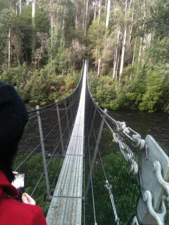 Would you dare? Swing bridge across the Huon river at the Tahune Forest Reserve circuit track, Tasmania, Australia.