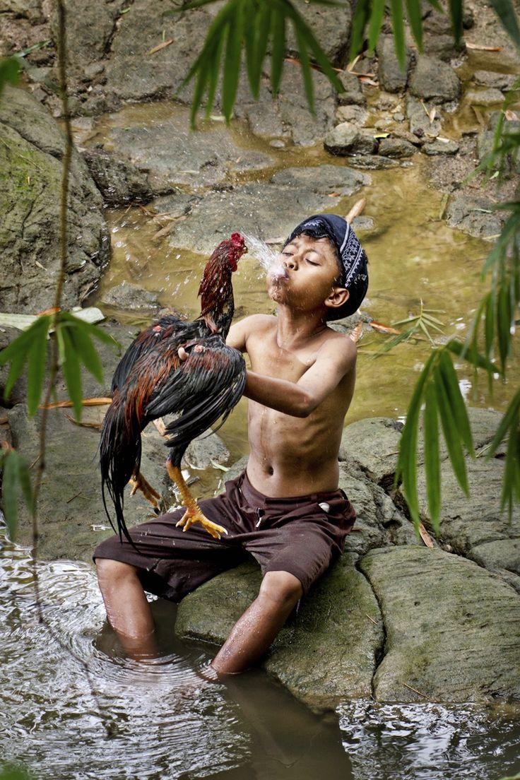 shower chicken by sesar arief on 500px