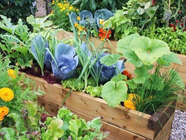 17 meilleures images propos de succulentes et autres for Blog jardin potager