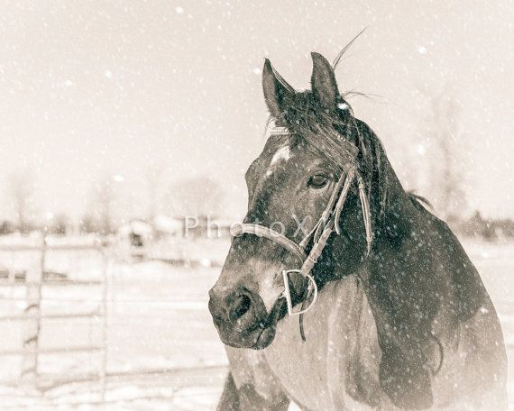Horse Photography Winter Horse Art Digital Download by PhotoX1