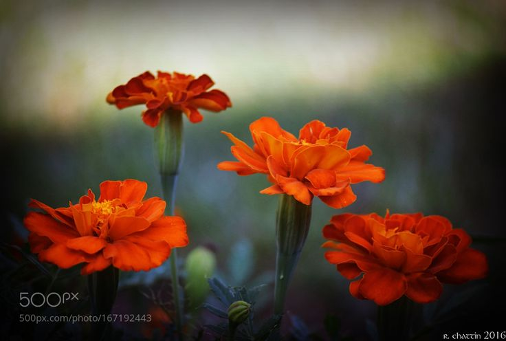 the color of fire... by rdmd1. @go4fotos