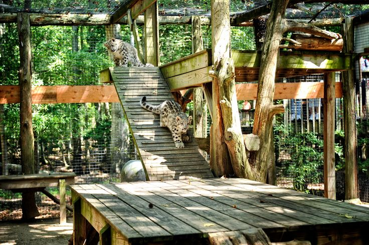 Admission and parking are FREE at the Cape May County Zoo! Cape May, New Jersey