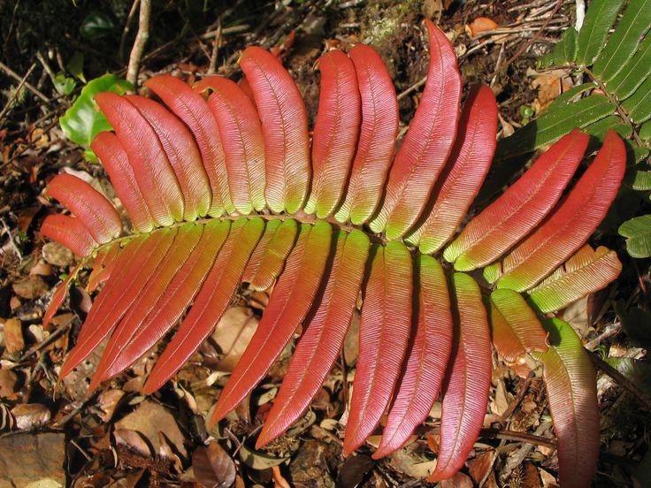 Tropical Rainforest Leaves Shiny rainforest leaf