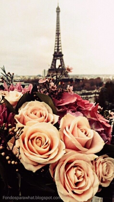Un fondo super Romántico de Rosas en París.   Para que decores tu chat de Whatsapp.