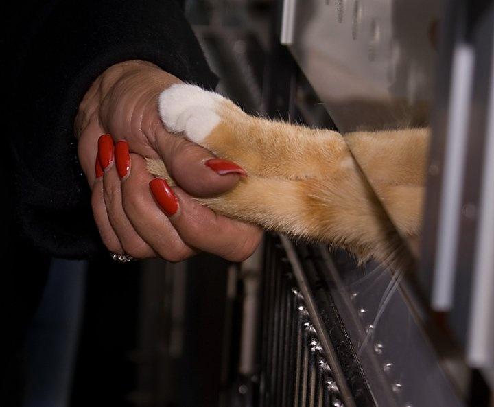 Bay Ridge Subaru Pet Adoption event with the ASPCA Pet