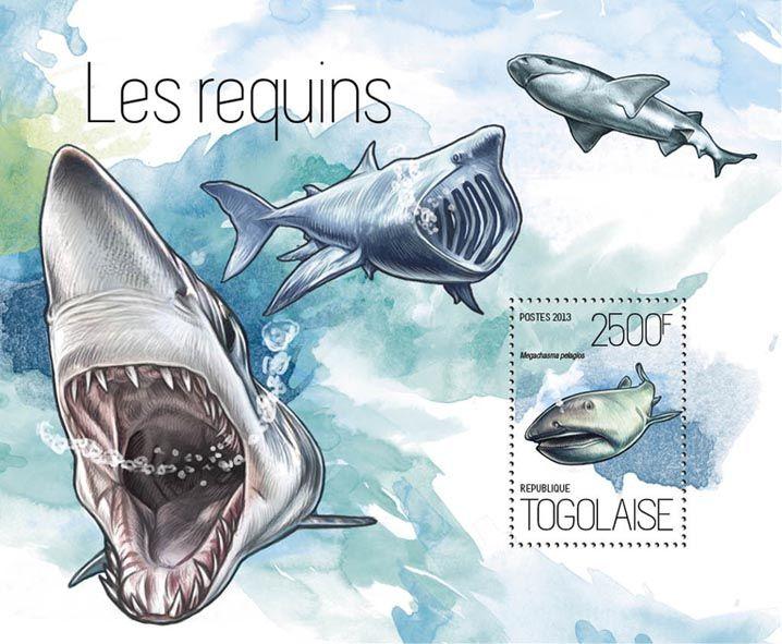 TG 13818 b – Sharks, (Megachasma pelagios).