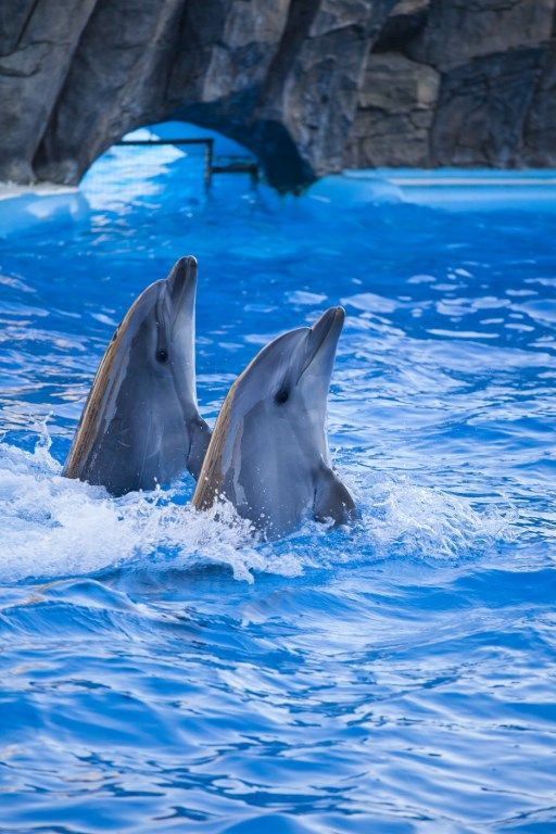 Batumi Dolphinarium | ბათუმის დელფინარიუმი | Батумский Дельфинарий