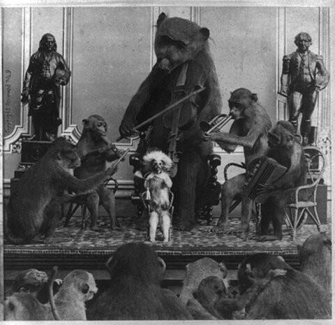 Bear monkey orchestra