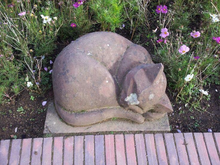 Cat at Belfast Castle