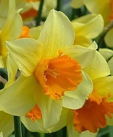 Browse all of the Narcissus Flower photos, GIFs and videos. Find just what you're looking for on Photobucket