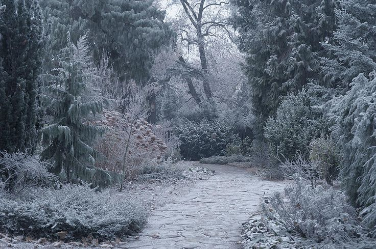 The Pathway. Enchanted Winter Garden by Jenny Rainbow.     Pathway through magnificent winter garden with majestic trees and plants covered with thin layer of frost.    Available as framed, metal, wood, acrylic prints and canvas in different sizes. Order and payment online, delivery, 30 days money back guaranty,  #JennyRainbowFineArtPhotography #FineArtLandscapes #HomeDecor #ArtForHome #Winter #WinterGraden