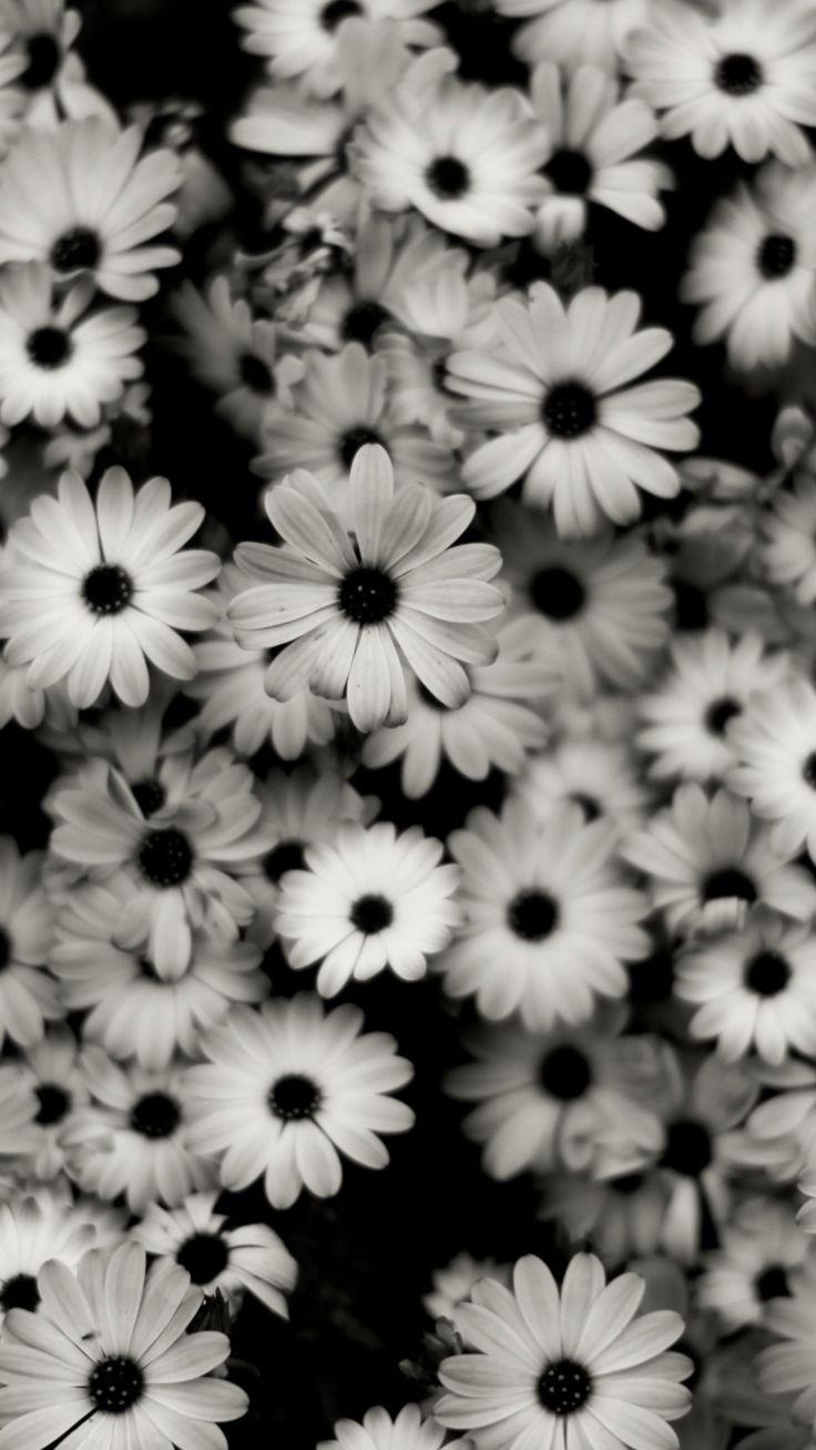 1440×2560 Preview wallpaper black white, flowers, grey, daisies 1440×2560 – Lara Sophie