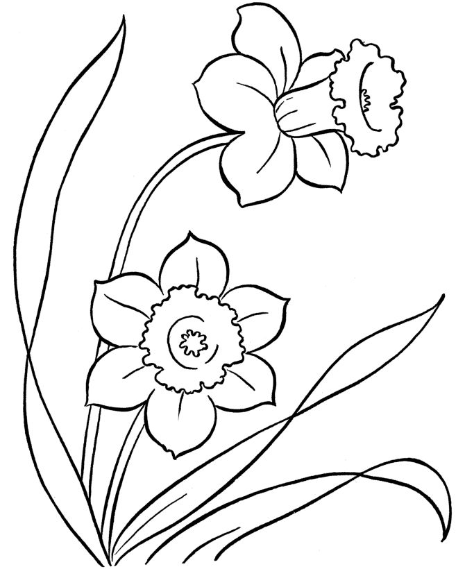 flower Page Printable Coloring Sheets | Coloring Pages - Free Printable Easter daffodils flowers coloring page ...
