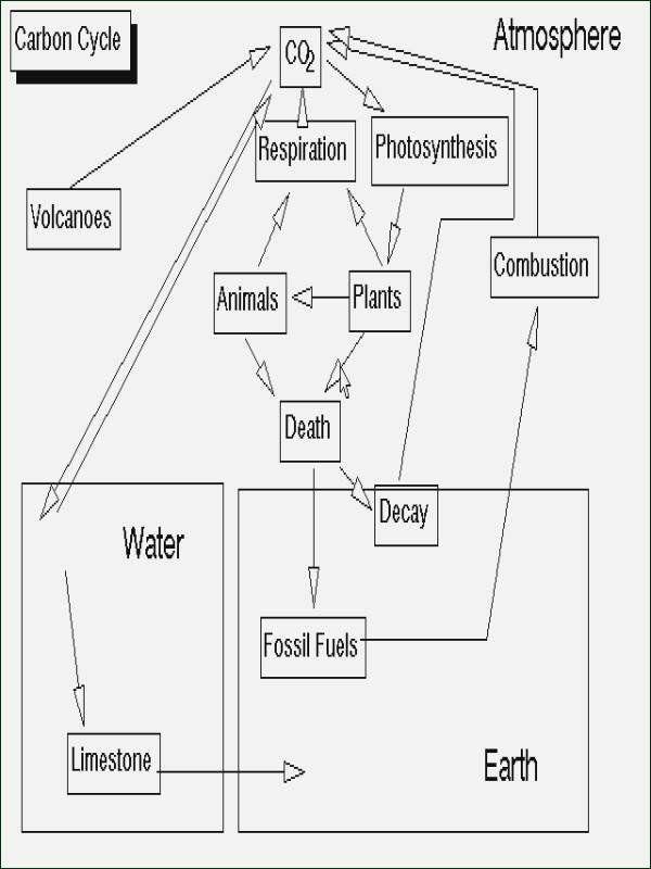 Carbon Cycle Diagram Worksheet Pin On Customize Design