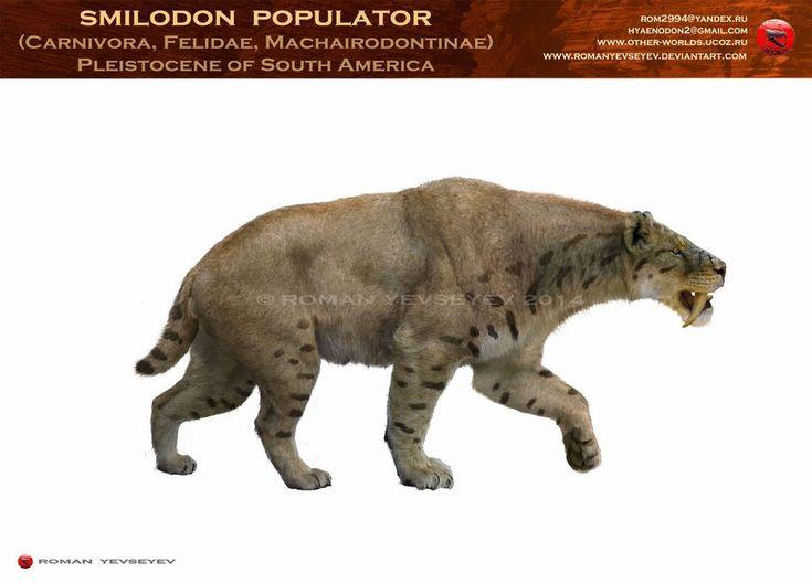 Smilodon Face By Pyroraptor42 On Deviantart: 17 Best Images About Megafauna On Pinterest