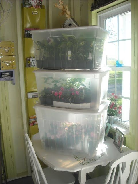 Mini greenhouses using plastic totes.