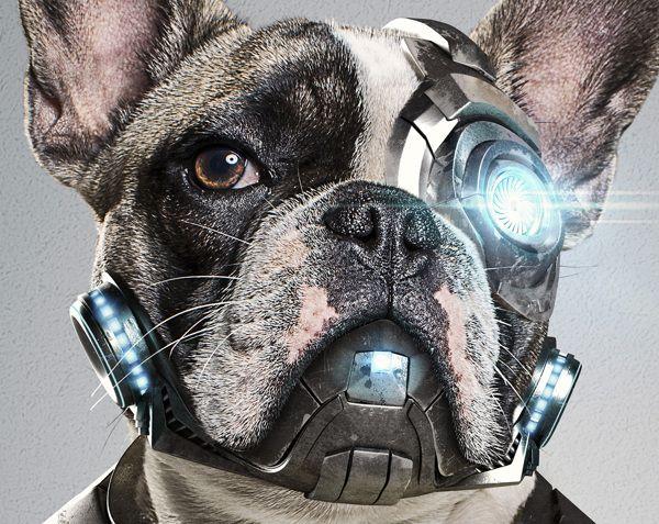 Cyber Dog l StudioNuts on Behance