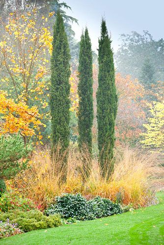 Autumn The Bressingham Gardens - Cupressus sempervirens 'Totem Pole' with Acer x hilleri 'Summer Gold' in Autumn mixed border at Foggy Bottom, Adrian Bloom/GAP Photos