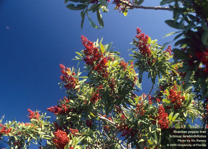 10 best weeds images on pinterest