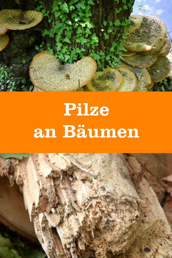 Pilze an Bäumen
