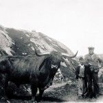 The Valtos Bull - a photo from the Uig Historical Society archive. Comunn Eachdraidh Uig is open from May to September. The display includes artefacts, maps and a recreated Blackhouse kitchen of c1919 plus access to an extensive archive covering the area from Scaliscro to Breanish, including the finding of the Lewis Chessmen.