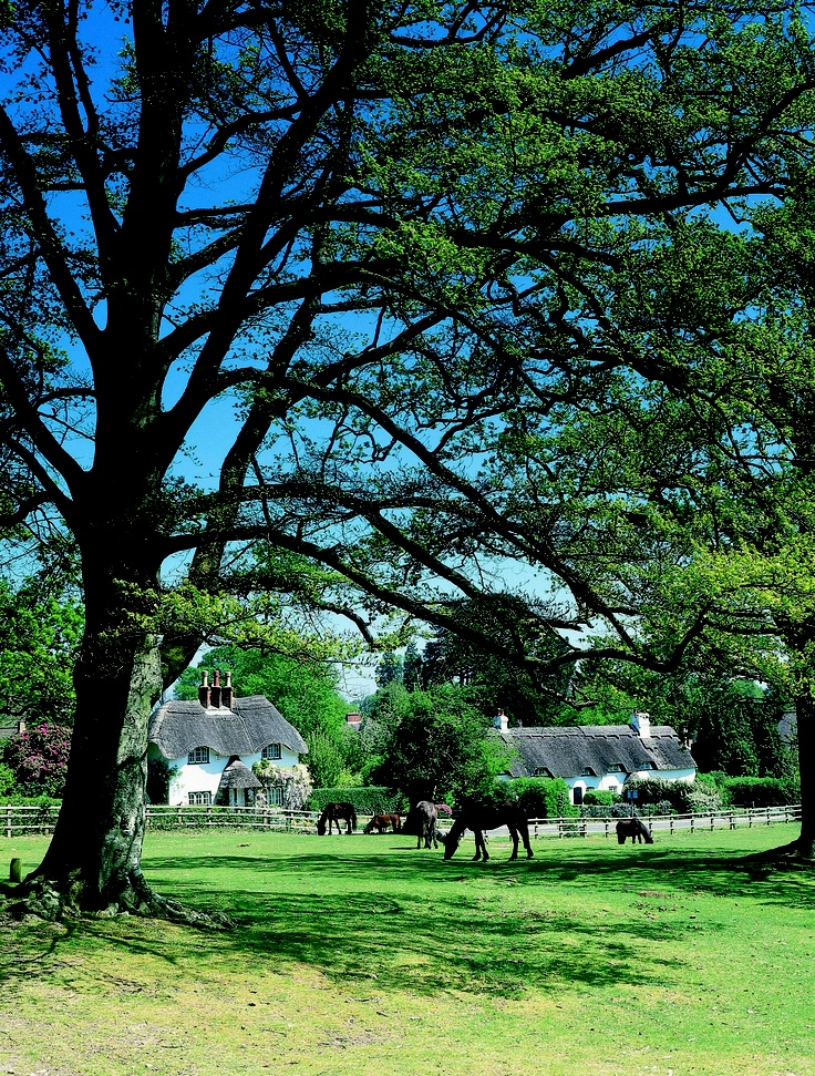 Swan Green - New Forest covers south-west Hampshire and extends into south-east Wiltshire and towards east Dorset.