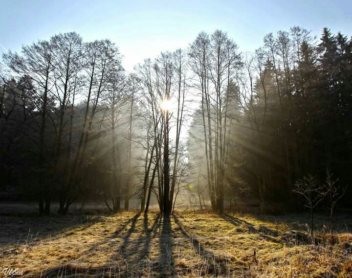 Vysočina, Svítání u Dolních Radslavic