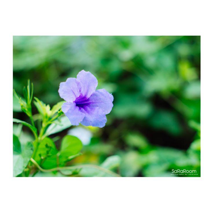 Purple Flower #purpleflower #flower #photography #panasonicgx8 #lumixgx8 #hexanon50/1.4 #hobbies