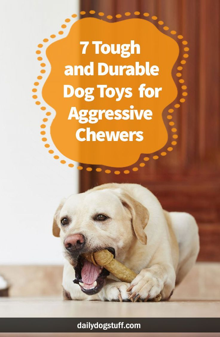 7 Tough And Durable Dog Toys For Aggressive Chewers Durable Dog
