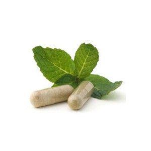 Le gokulakanta est une plante médicinale d'origine ayurvédique, il connait bon nombre d'implications dans différents traitements thérapeutiques. L'hygrophila spinosa est indiqué pour soigner les maladies du foie...