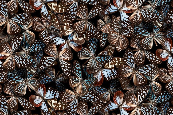 """Amatsu was inspired by Danainae butterflies. """"At a glance, they appear plain, in black and white, but when reflected by the lights, their colors change to blue and transparent, transforming into butterflies of a fantasy.--Yu Amatsu, HanaeMori"""