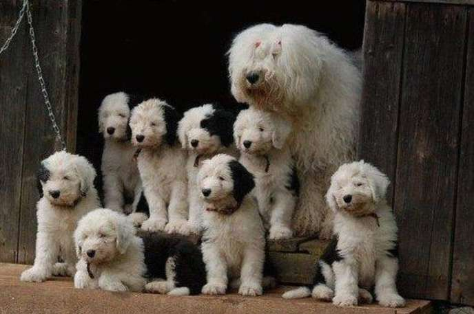 These Photos of Moms with Their Puppies Are Beyond Precious - Answers.com
