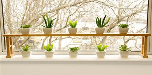 Window Sill Plants Solidaria Garden