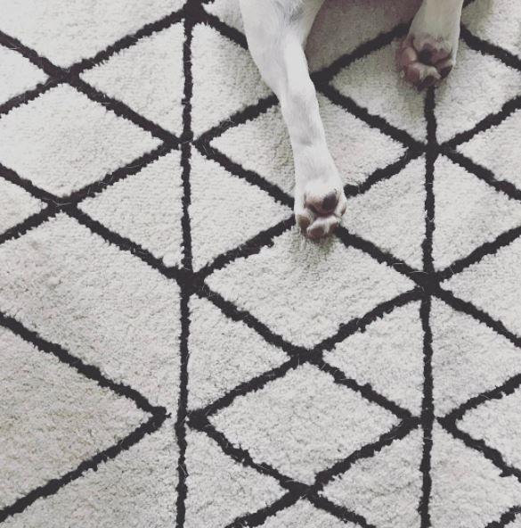 Un invité mystère s'est glissé sur cette photo de tapis. Saurez-vous le retrouver ?  Pour les curieux, rendez-vous sur le compte instgram de @lilly_and_thefrenchie
