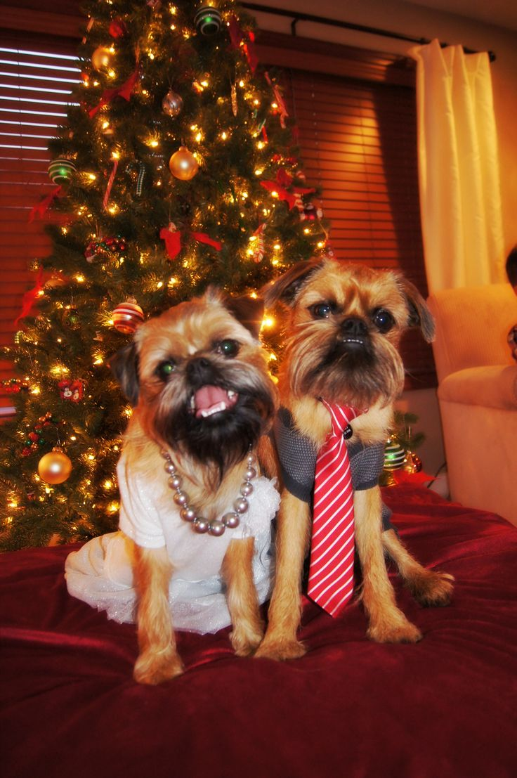 241 best christmas pets images on pinterest christmas animals