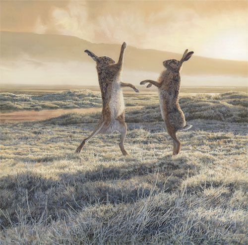 Boxing Hares in a frosty field as the mist lifts - by Martin Ridley